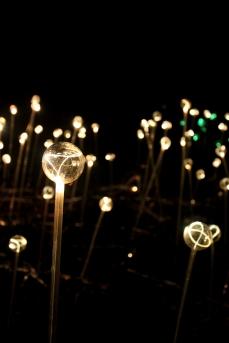 Light at Longwood Gardens 2