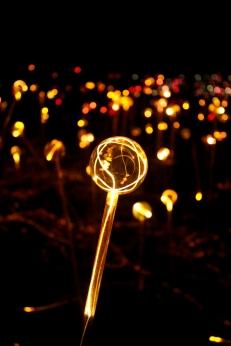 Light at Longwood Gardens 3